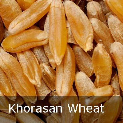 khorasan_wheat